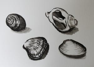 Shells ink